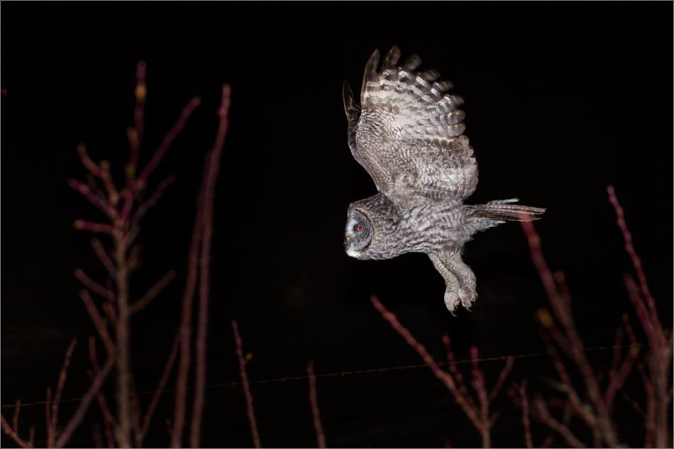 Night owl - © Christopher Martin-4069-4