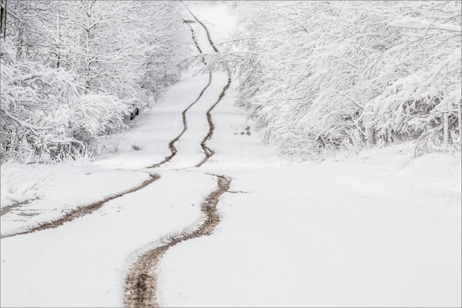 Spring snow in Bragg Creek - © Christopher Martin-6784