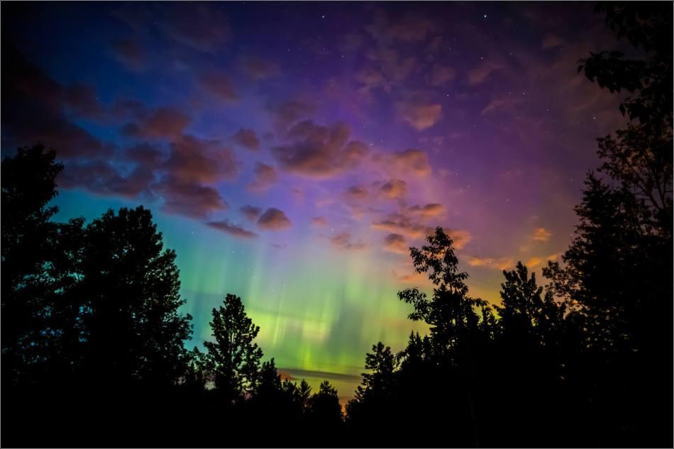 Aurora Borealis above the forest  - © Christopher Martin-5571