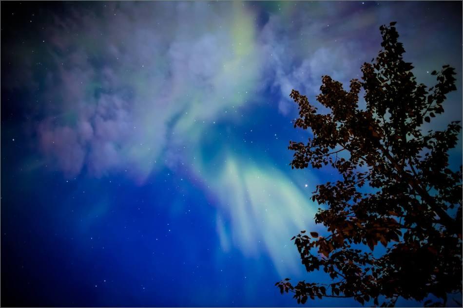 Redwood Aurora - © Christopher Martin-5561