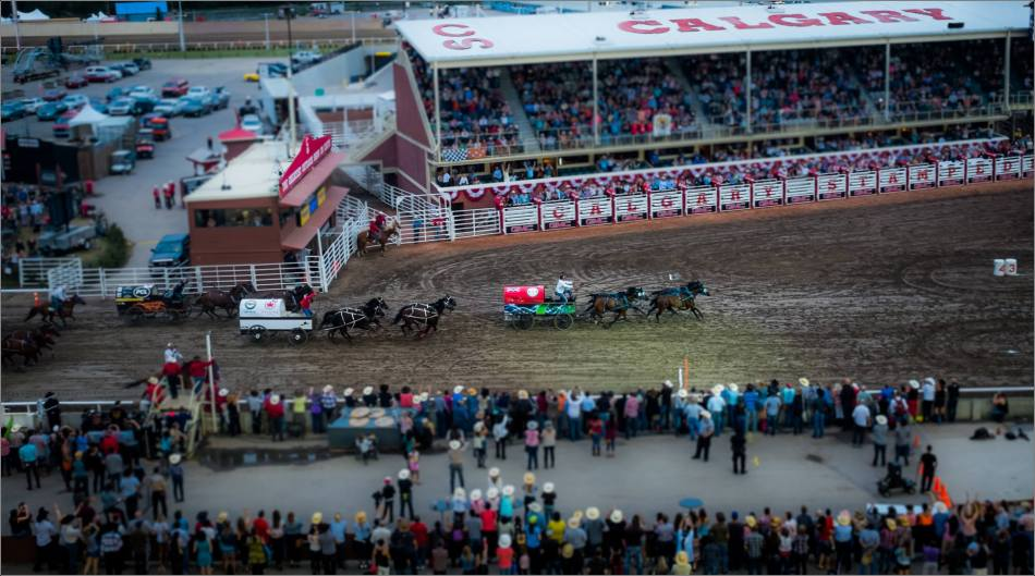 2015 Stampede Chuckwagon Finals - © Christopher Martin-0351-2