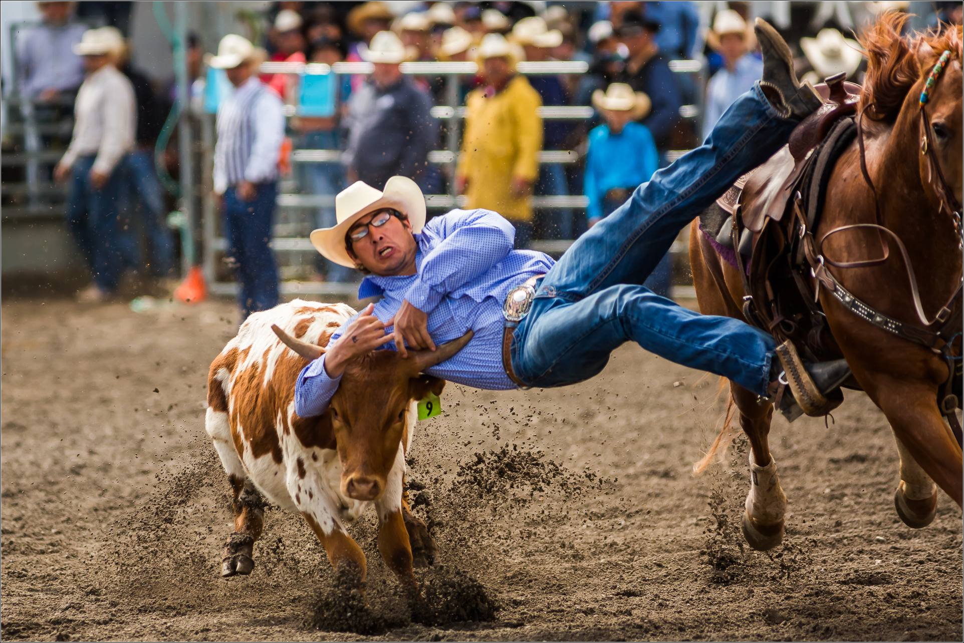 Steer Wrestling At The Tsuu T Ina Rodeo Christopher