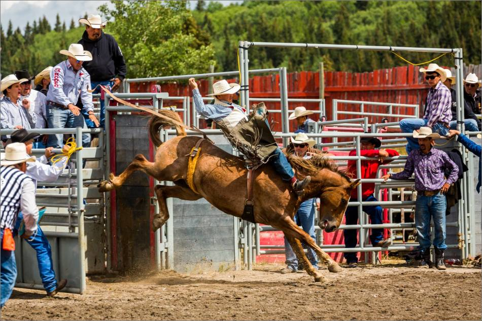 2015 Tsuu T'ina Saddle Bronc Finals - © Christopher Martin-0898
