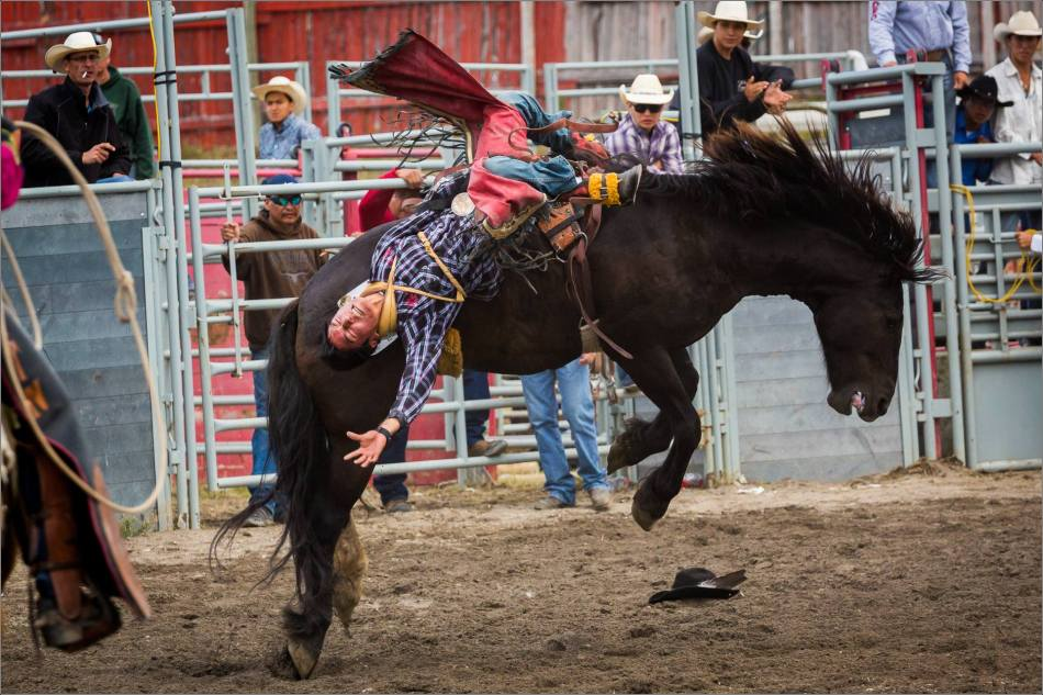 2015 Tsuu T'ina Saddle Bronc Finals - © Christopher Martin-1003