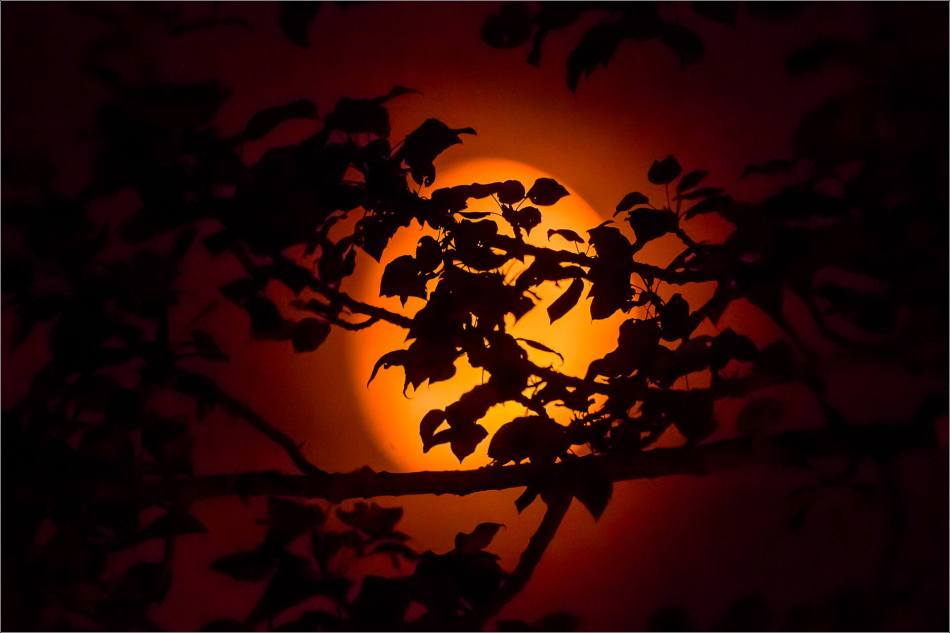 Smoky moon silhouettes - © Christopher Martin-4625