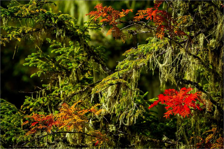 Red leaves at Shudu - © Christopher Martin-9671