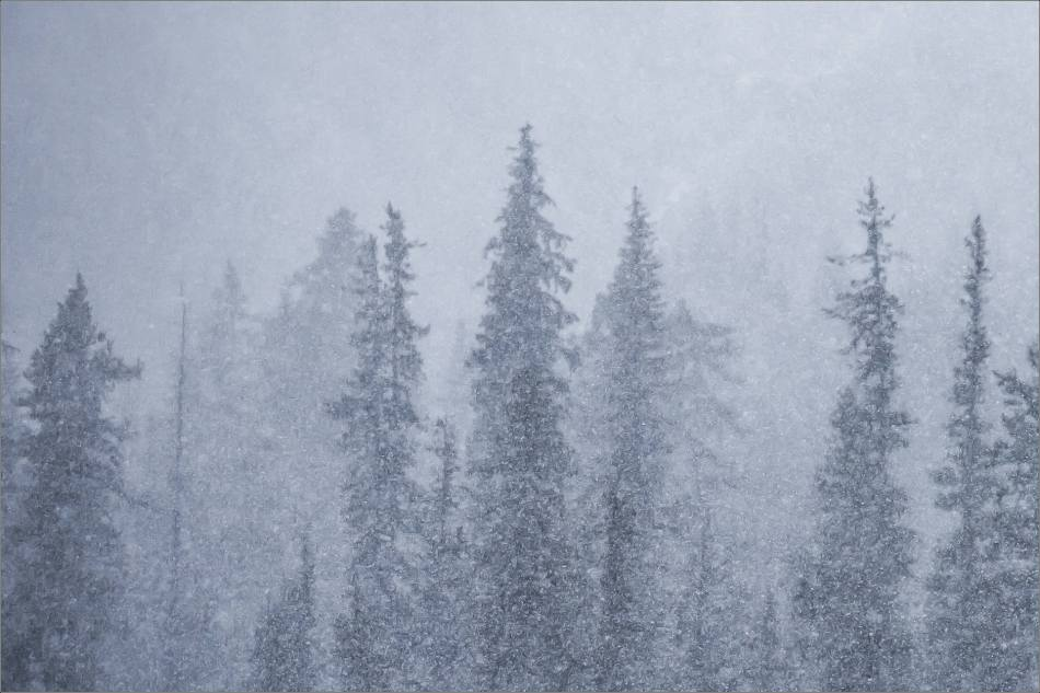 Snowstorm silhouettes in Kananaskis Country - © Christopher Martin-0890