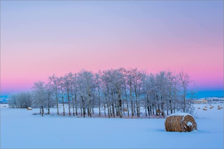 Dawn hoar frost landscape - © Christopher Martin-9565
