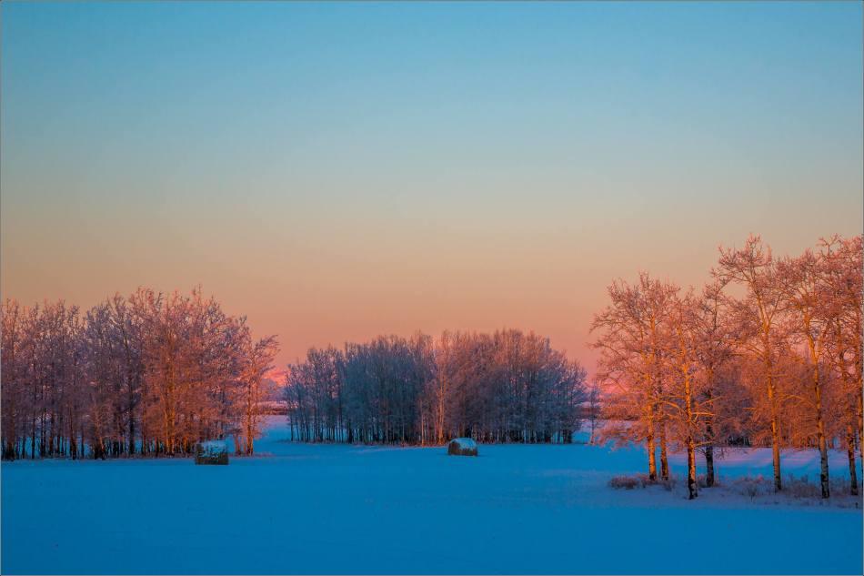 Dawn hoar frost landscape - © Christopher Martin-9614