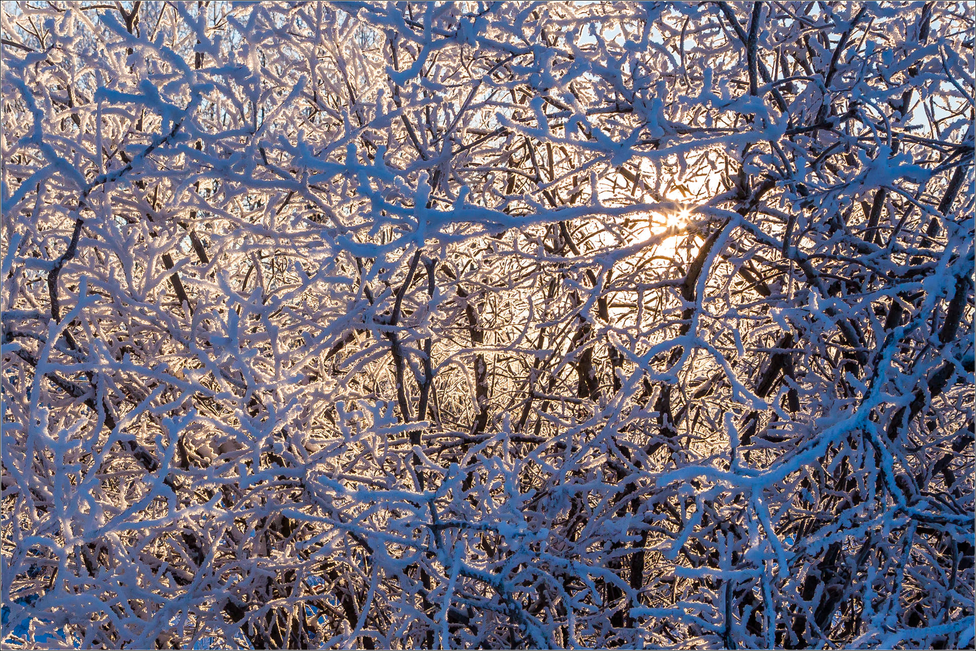 Hoar frost abstract - © Christopher Martin-9788