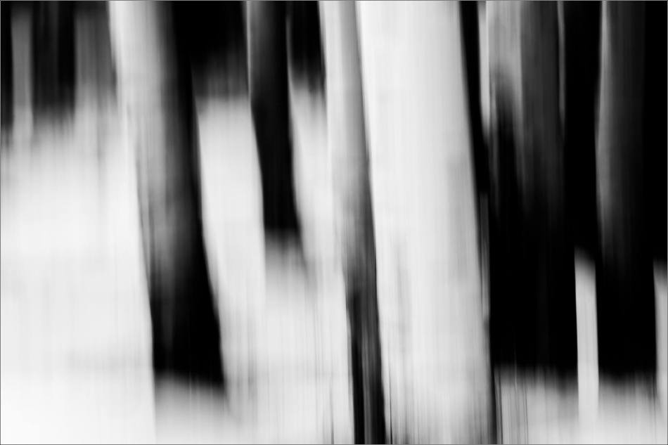 Aspen lines along Grand Valley Road - © Christopher Martin-1111