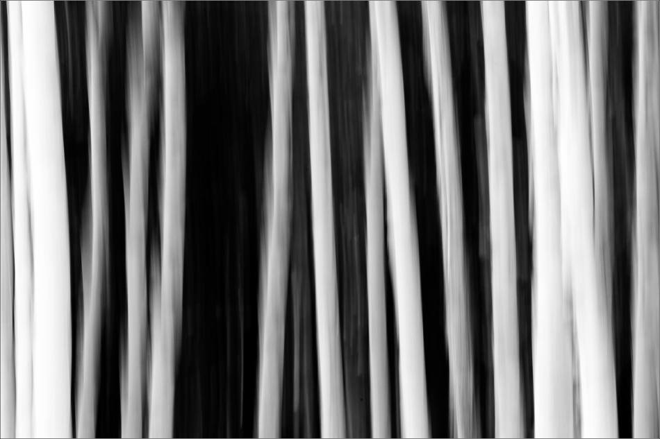 Aspen lines along Grand Valley Road - © Christopher Martin-1119