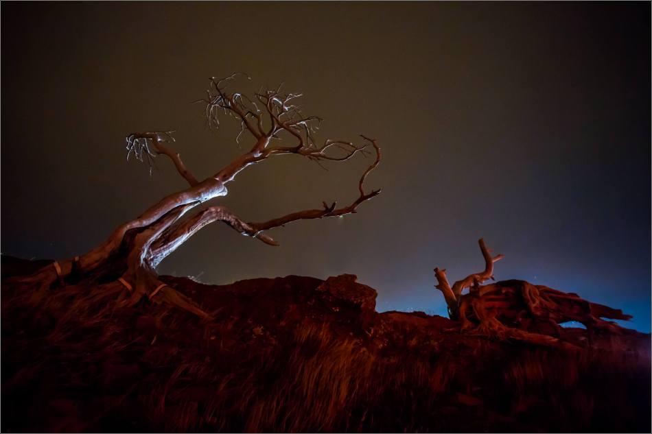 Burmis Tree at night - © Christopher Martin-0261