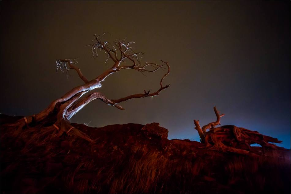 Burmis Tree at night - © Christopher Martin-0261