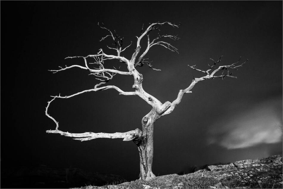 Burris Tree in black and white - © Christopher Martin-0230