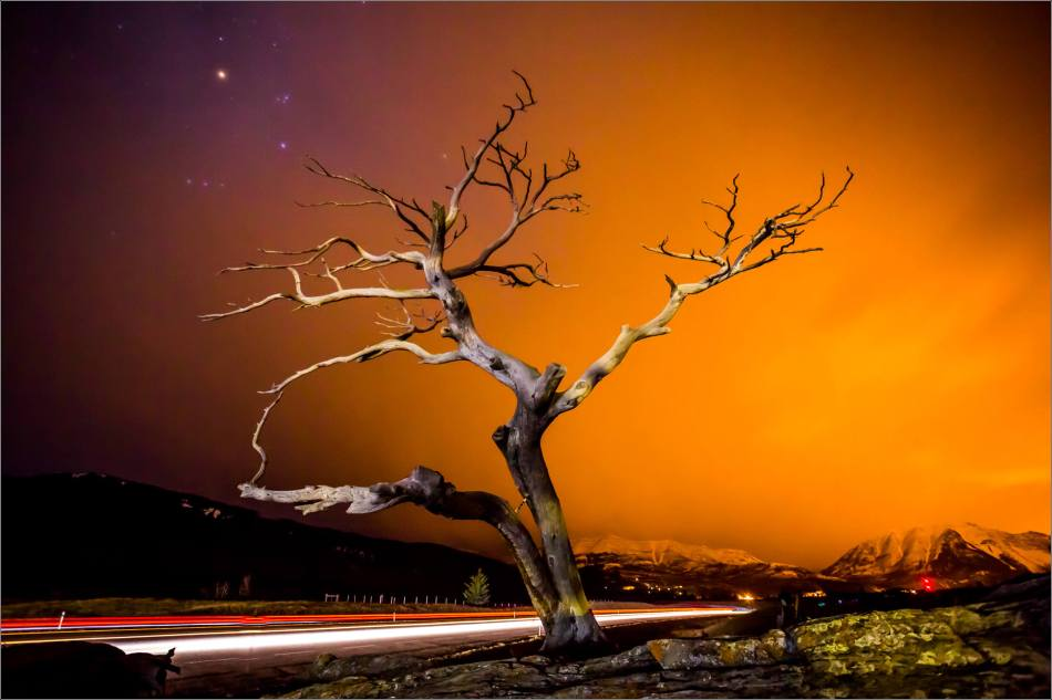 Burris Tree and highway lights - © Christopher Martin-0241-2