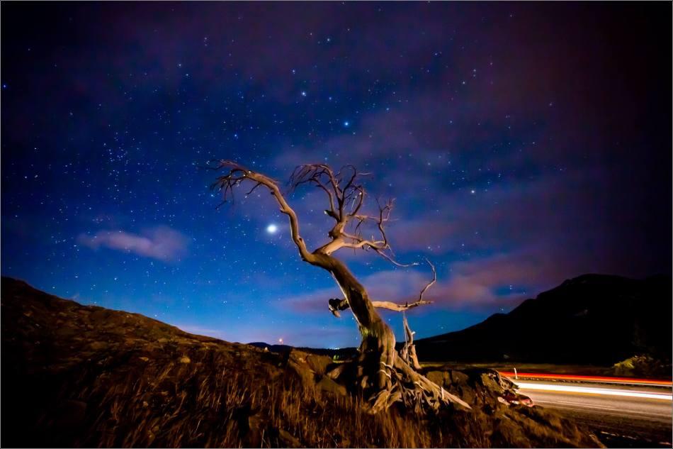 Burmis Tree - © Christopher Martin-0245