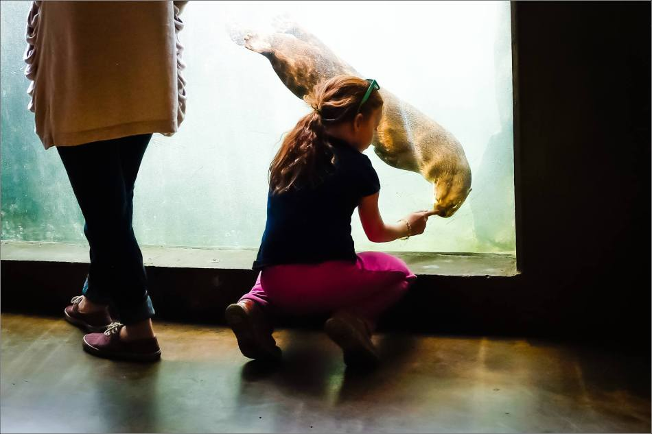 Kezia with a River otter at the Calgary Zoo - © Christopher Martin-2103