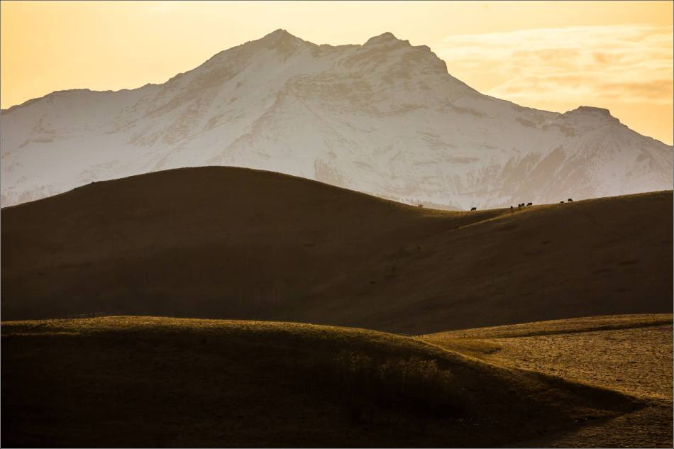 Late afternoon at the foot of the Livingstone Range - © Christopher Martin-6240