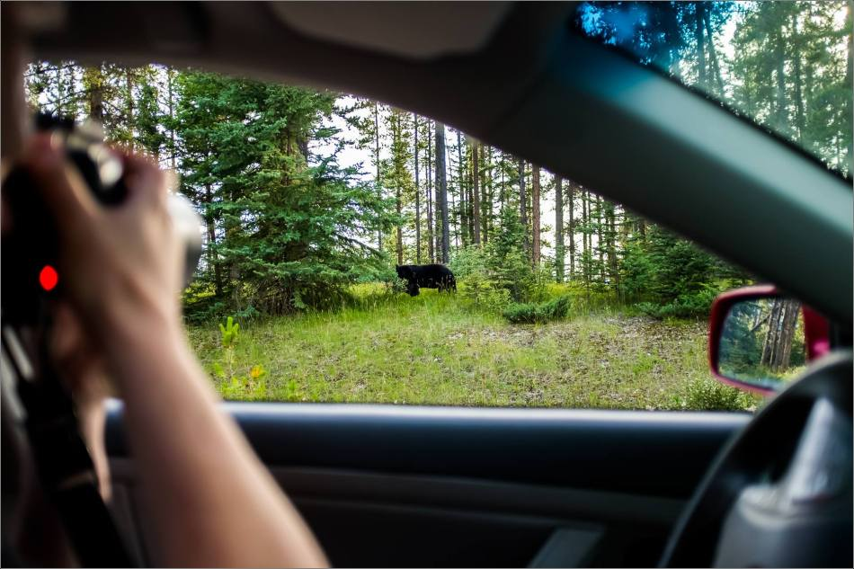 Johnson Lake Black bear - © Kian Martin-3598