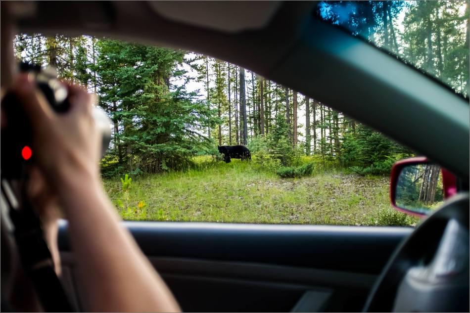 Johnson Lake Black bear - © Kian Martin-3598
