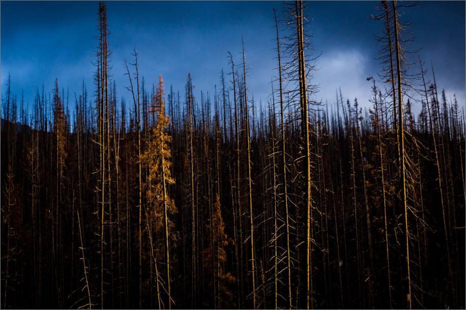 skeleton-trees-at-sunset-christopher-martin-2945