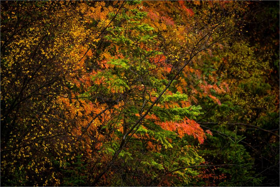 autumn-colors-in-nature-christopher-martin-8629