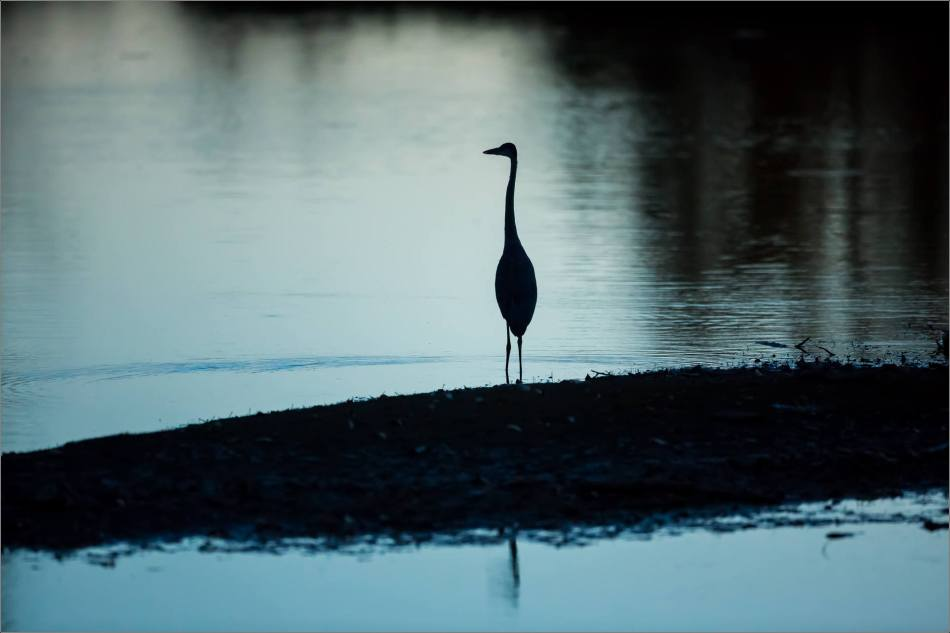inglewood-heron-silhouette-christopher-martin-7118