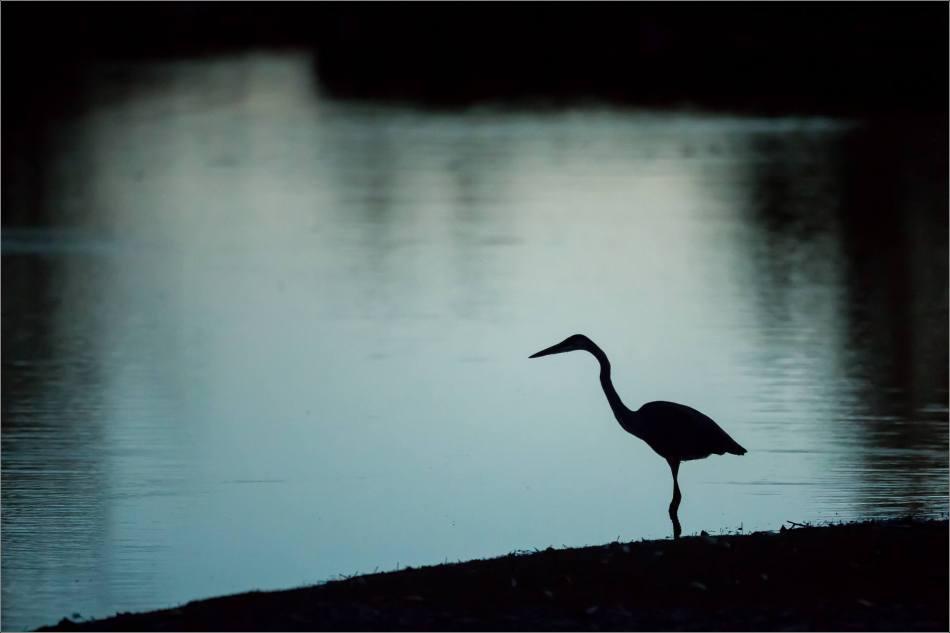 inglewood-heron-silhouette-christopher-martin-7125