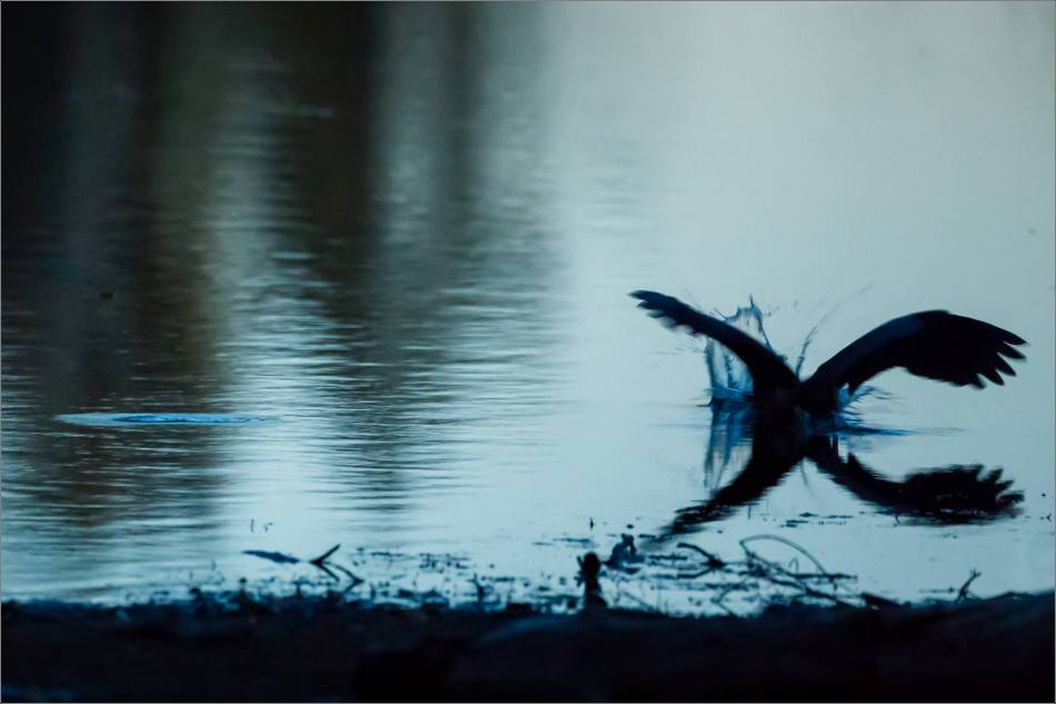 inglewood-heron-silhouette-christopher-martin-7175