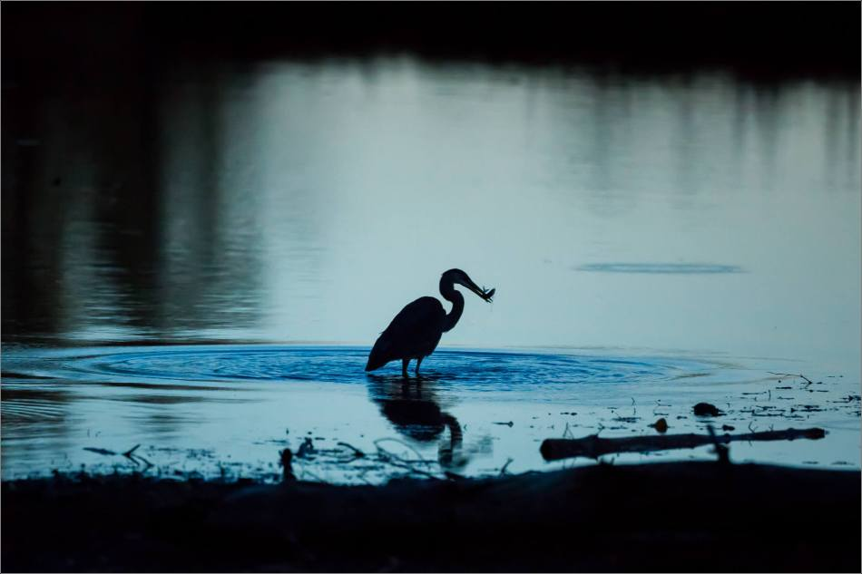 inglewood-heron-silhouette-christopher-martin-7181