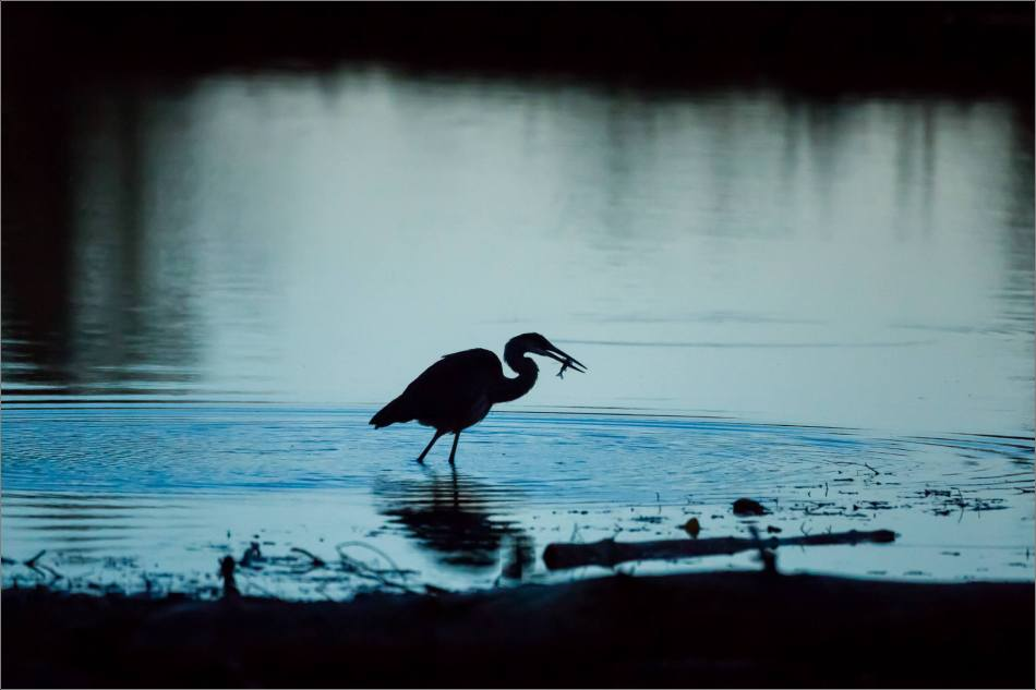 inglewood-heron-silhouette-christopher-martin-7189