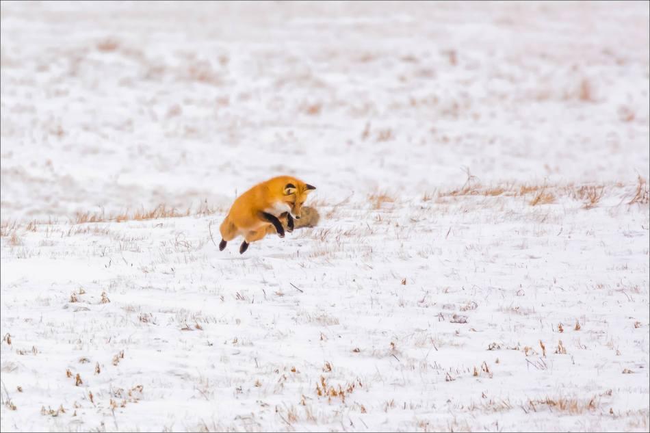 langdon-fox-on-the-hunt-christopher-martin-5710