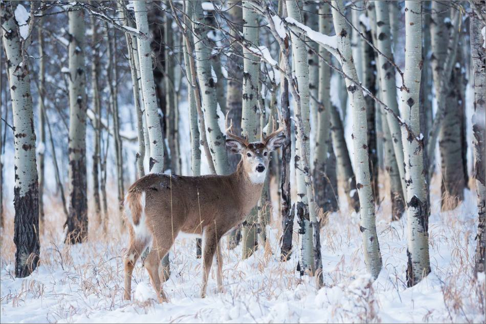 new-years-eve-deer-christopher-martin-7408