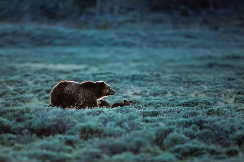 2016-favourite-wildlife-christopher-martin-9360
