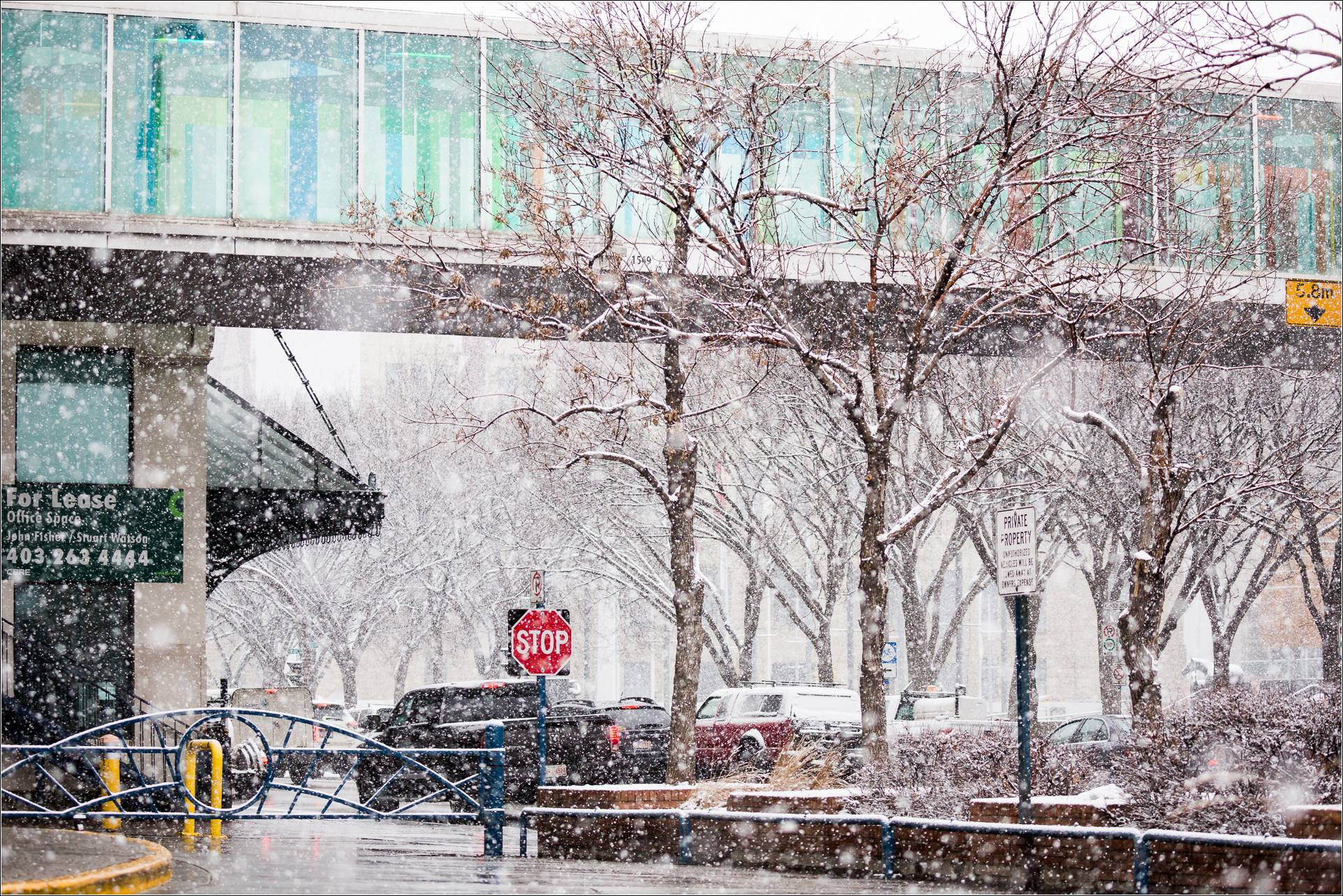 Snowstorm in downtown Calgary- © Christopher Martin-5262