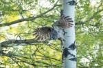Owl forest flights – © ChristopherMartin-4105