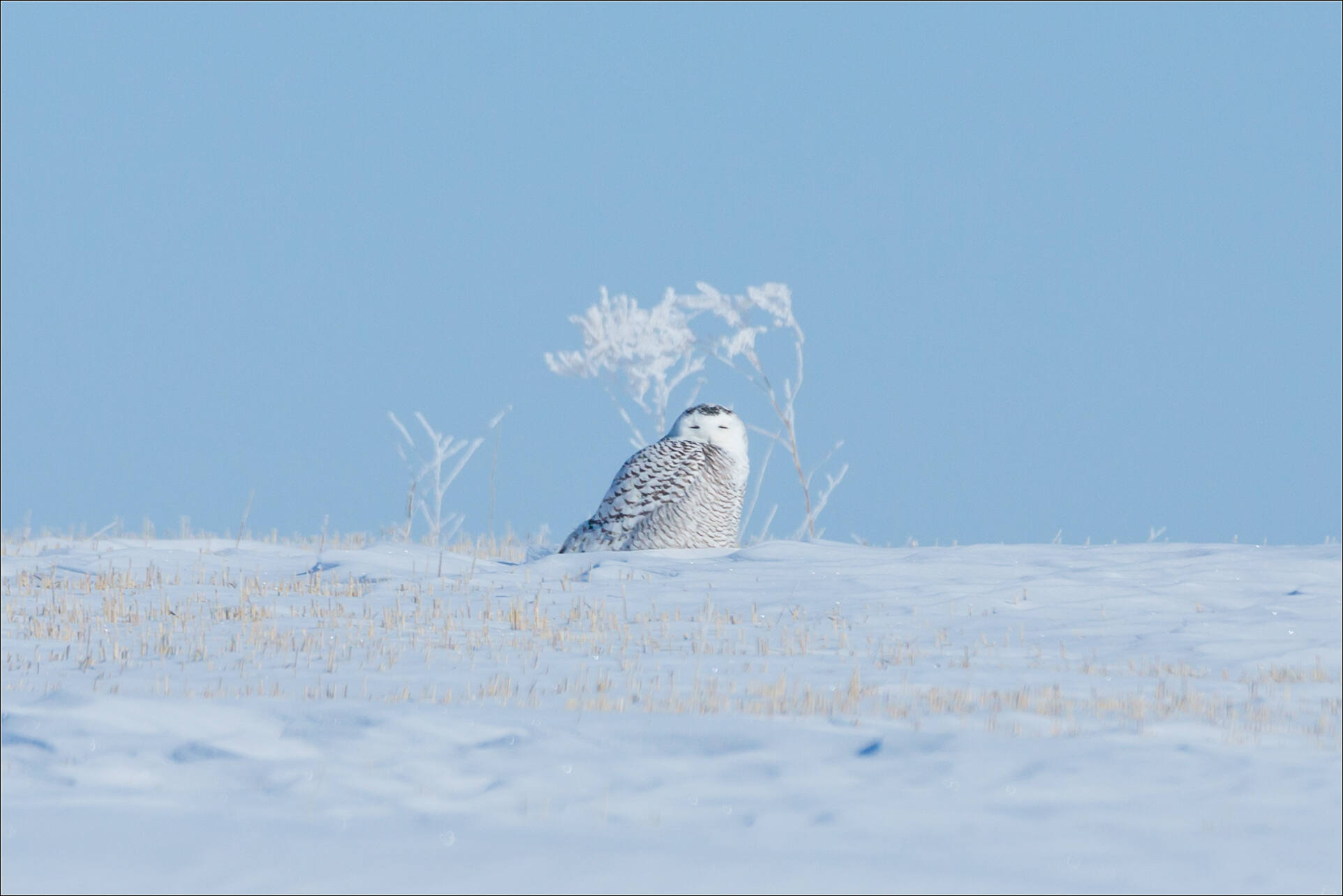 Favoured by a snowy glance - © Christopher Martin-9189