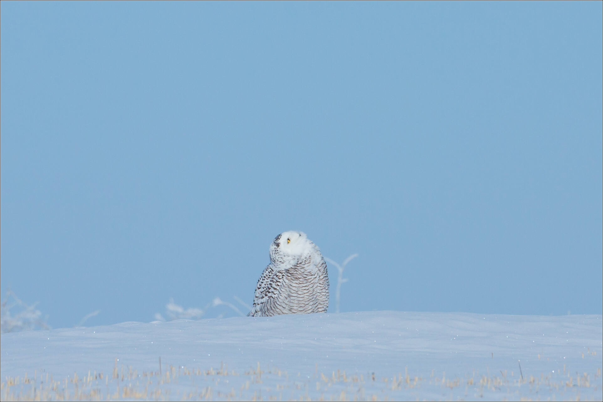 Favoured by a snowy glance - © Christopher Martin-9280