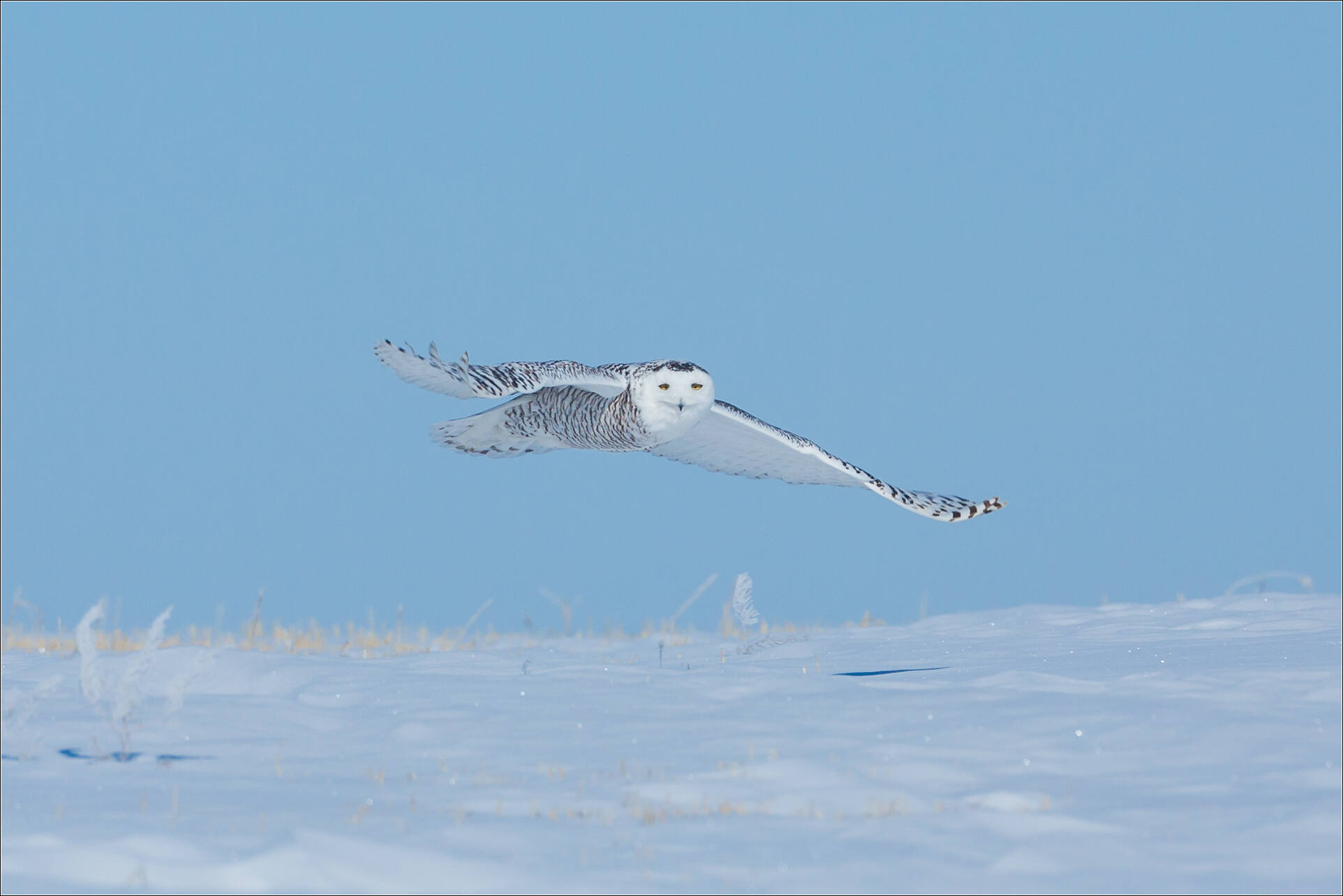 Favoured by a snowy glance - © Christopher Martin-9301-3.jpg